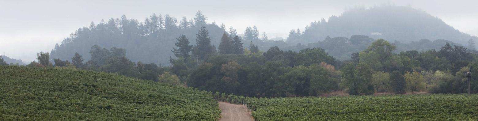 Stone Vineyard